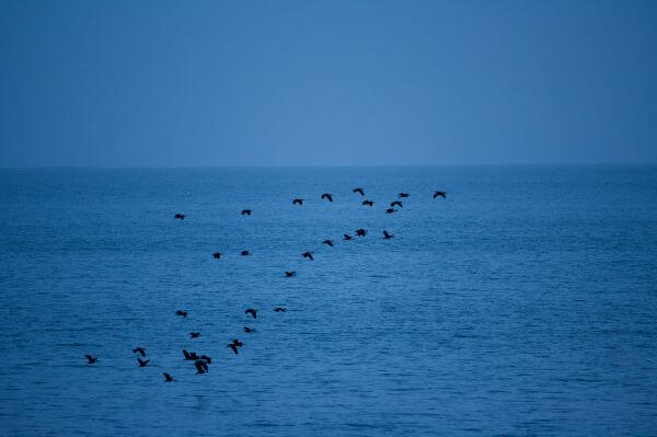 Birds Flying Over The Sea photo