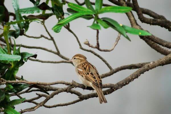Beautiful Sparrow photo
