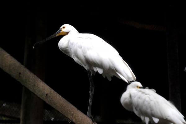 Big White Bird photo