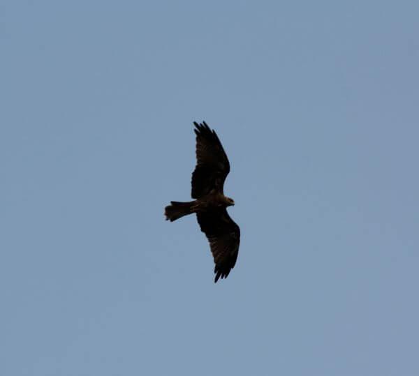 Bird Flying photo