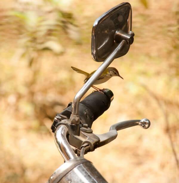 Bird On A Bike photo