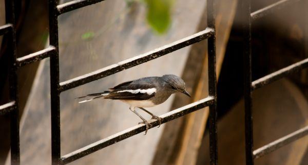Bird Sitting photo