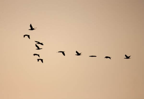 Birds Formation photo