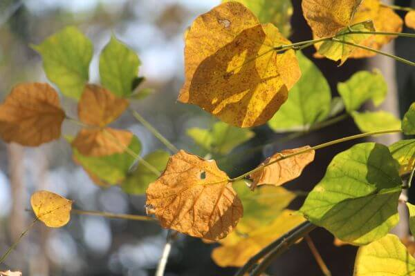 Autumn Leaves Brown Golden photo