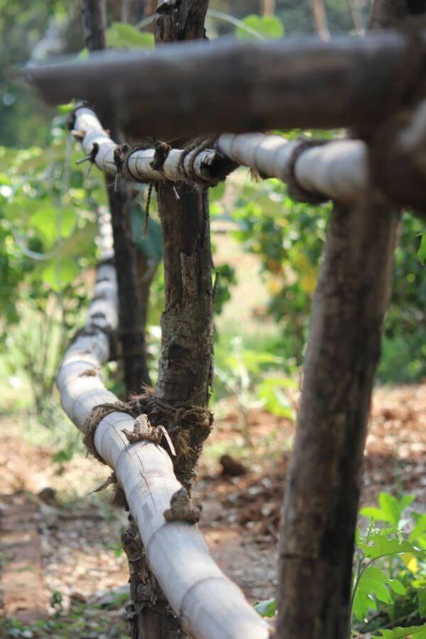 Bamboo Fence Garden photo