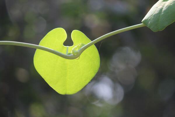 Beautiful Leaf photo