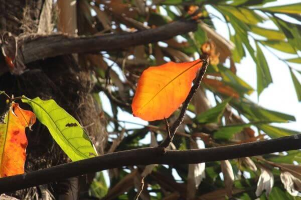 Beautiful Orange Leaf On Tree photo