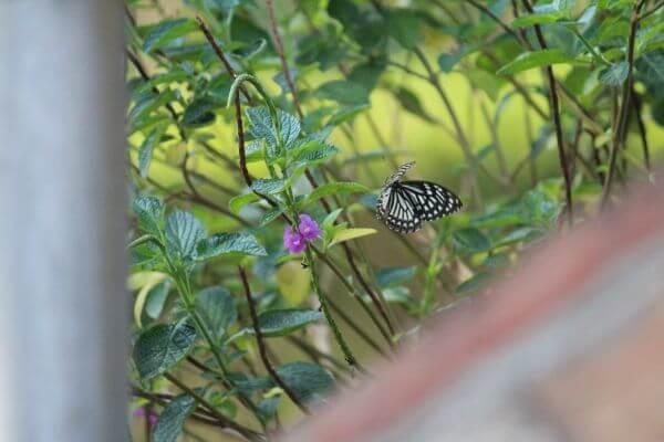 Butterfly In Garden photo