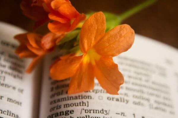 Orange Flower Dictionary photo