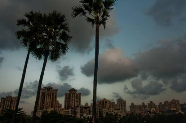 Palm Trees Buildings photo