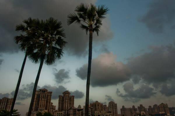 Palm Trees City photo