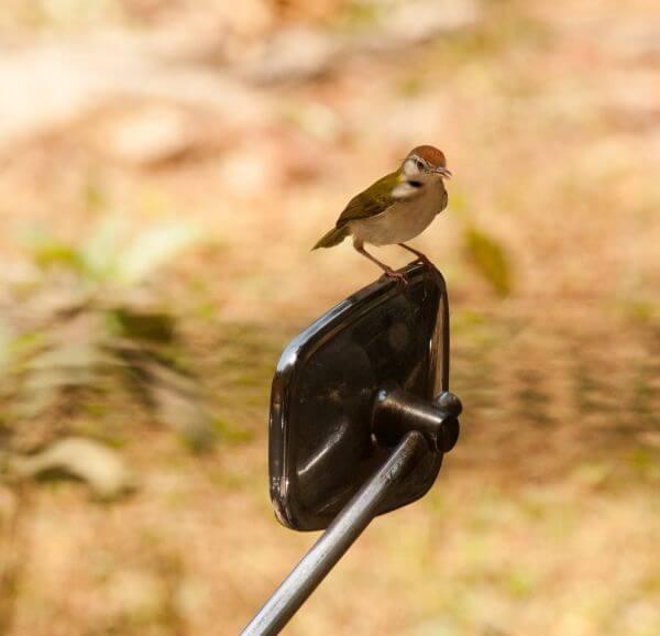 Bike Mirror Bird photo