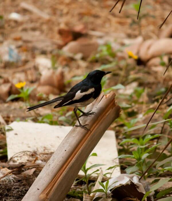 Bird Black photo