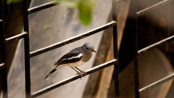 Bird Window photo