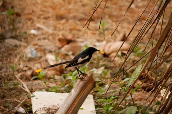 Black Small Bird photo