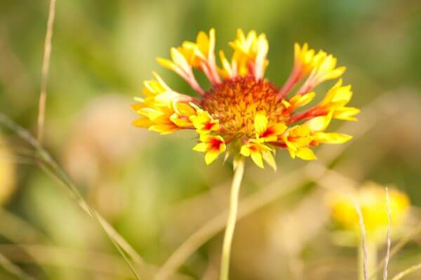 Blooming Yellow Flower photo
