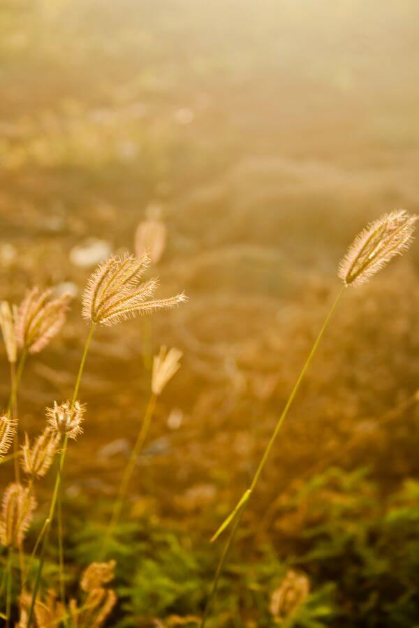 Farm Golden Fields photo