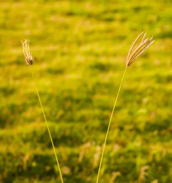 Green Stalk Plant photo