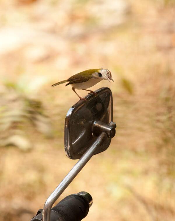 Rearview Mirror Bird photo