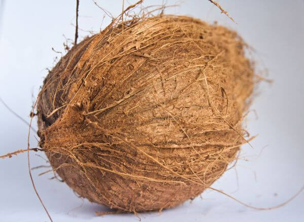 Dried Coconut photo