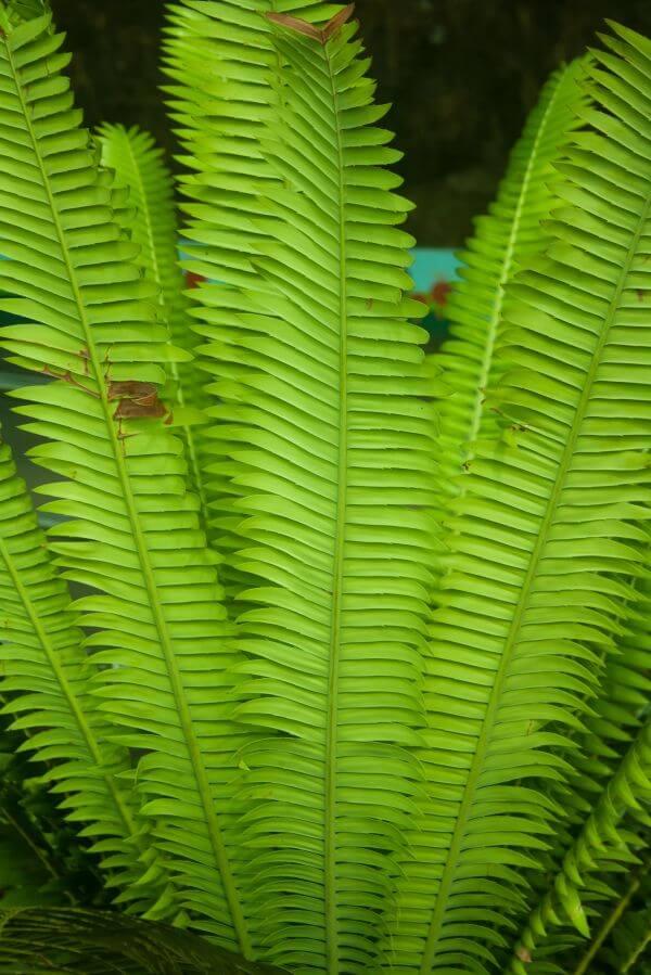 Ferns Green Plant photo