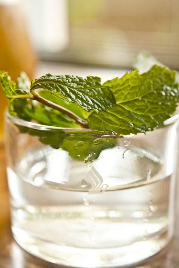 Leaf Glass photo