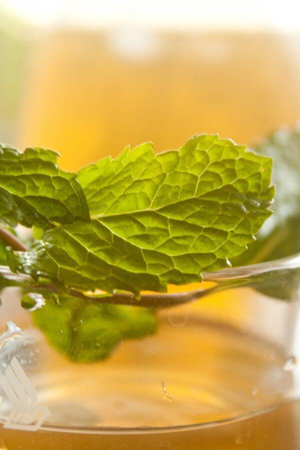 Leaf Juice Glass photo