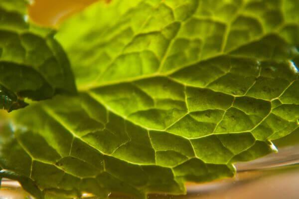 Leaves Closeup photo