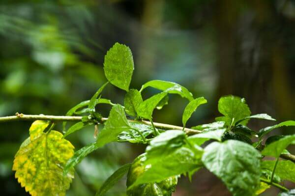 Plant Leaves photo