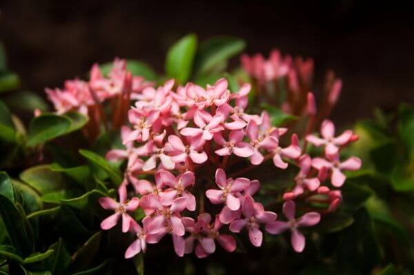 Small Pink Flowers photo