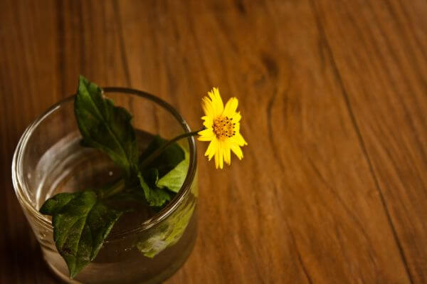 Yellow Flower Beautiful photo