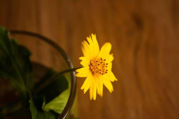 Yellow Flower Glass photo