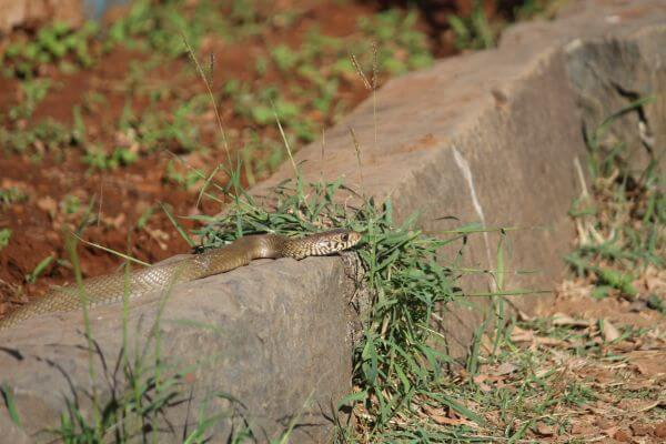 Snake In Garden Forest photo