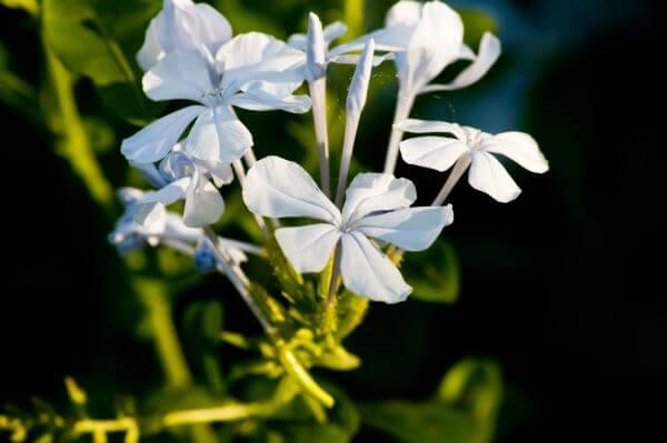 Bluish Flowers photo