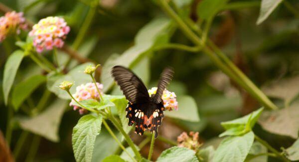 Butterfly Fluttering photo