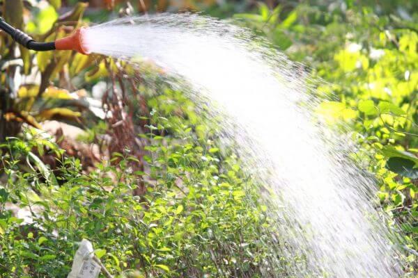Water Garden Hosepipe photo