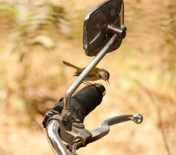 Small Bird Bike photo