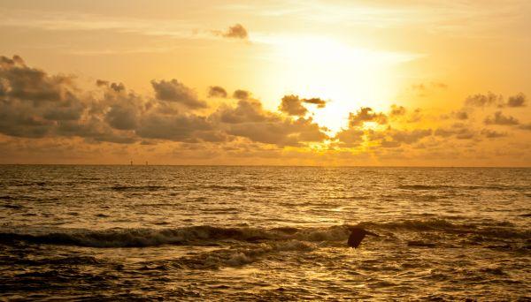 Sun Waves Sea photo