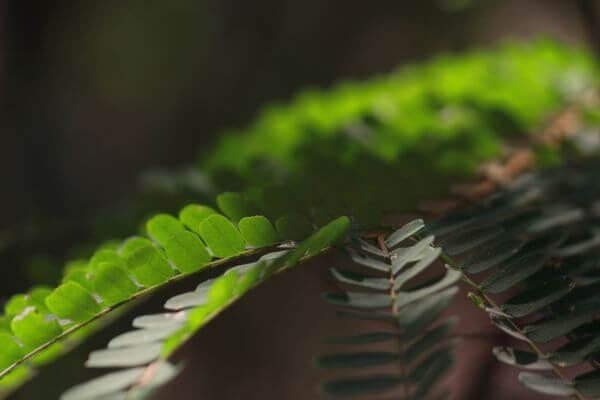 Weed Fern Closeup photo