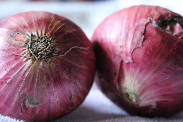 Onions Closeup Food photo