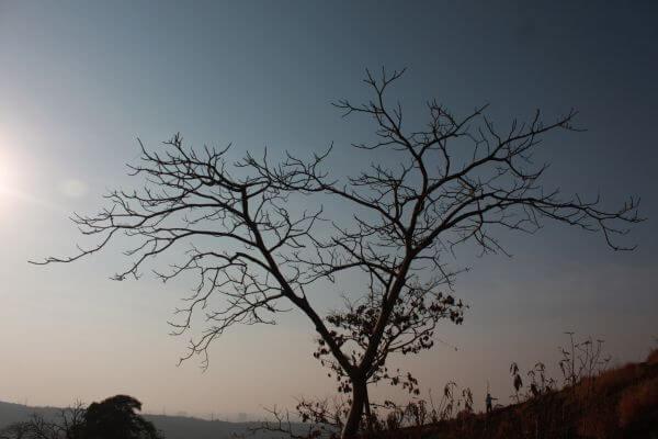 Barren Tree photo
