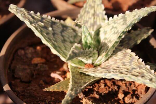 Cactus Plant Potted photo