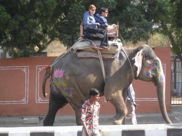 Elephant Tourists India photo