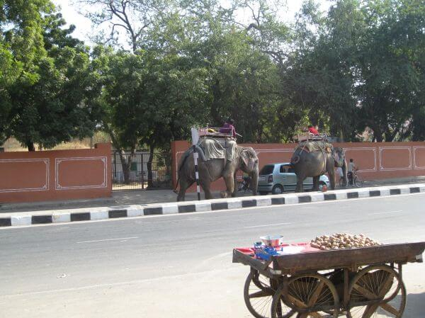 Elephants India Road photo