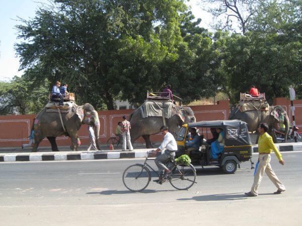 Elephants Jaipur India photo