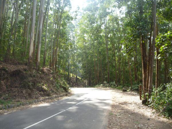 Beautiful Road Amid Trees photo