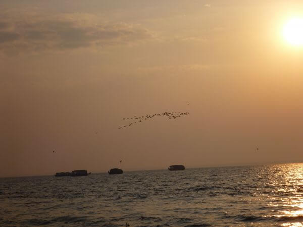 Birds Boats Sun Sea photo
