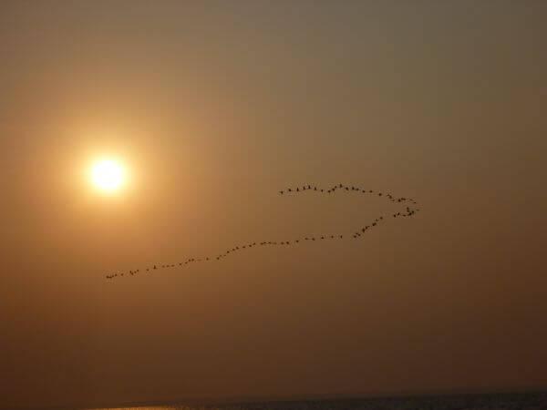 Birds Formation Sea Sunset photo