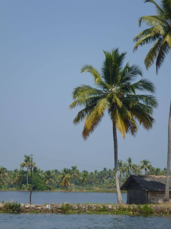 Coconut Tree Huts photo