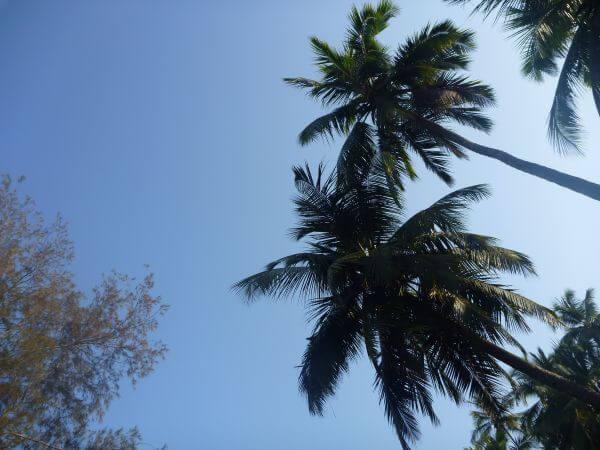 Coconut Tropics photo
